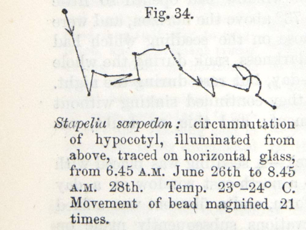 Image of Darwin-F1325-1880-zzzz-det-046