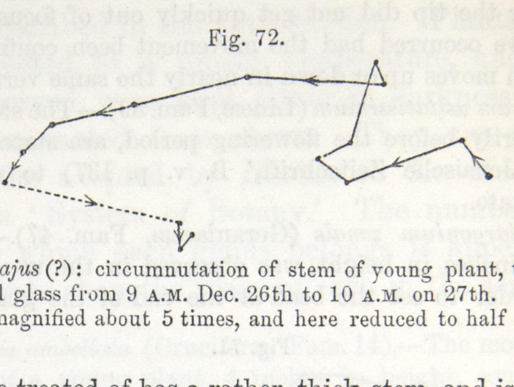 Image of Darwin-F1325-1880-zzzz-det-204-1