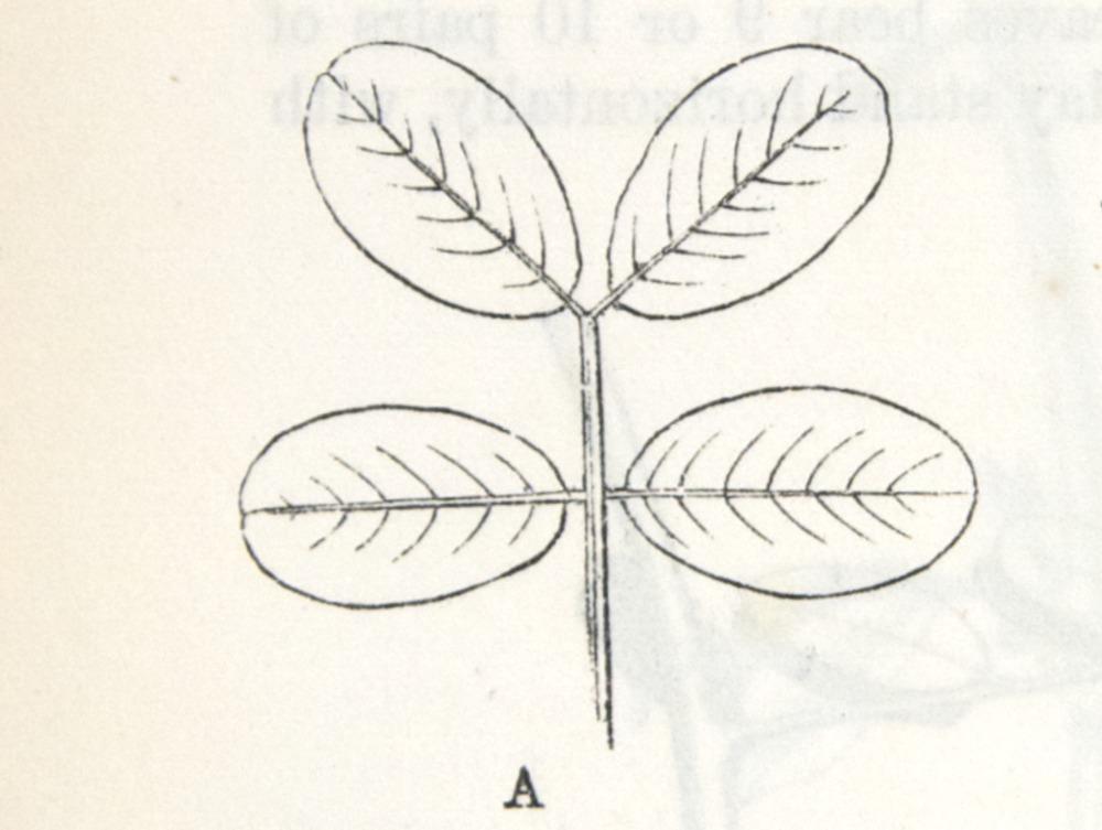 Image of Darwin-F1325-1880-zzzz-det-356-1