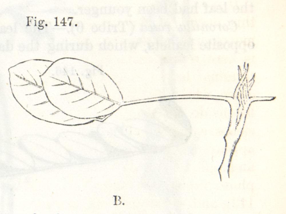 Image of Darwin-F1325-1880-zzzz-det-356-2