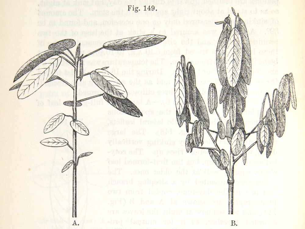 Image of Darwin-F1325-1880-zzzz-det-358