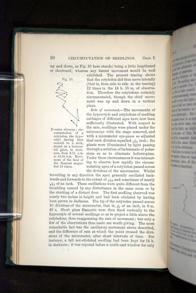Image of Darwin-F1325-1880-020