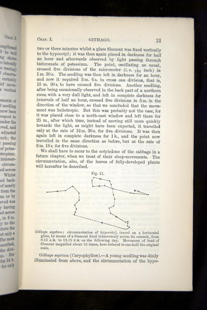 Image of Darwin-F1325-1880-021