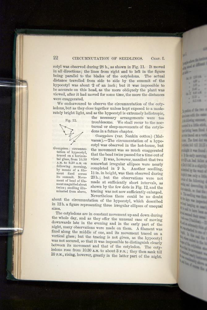 Image of Darwin-F1325-1880-022