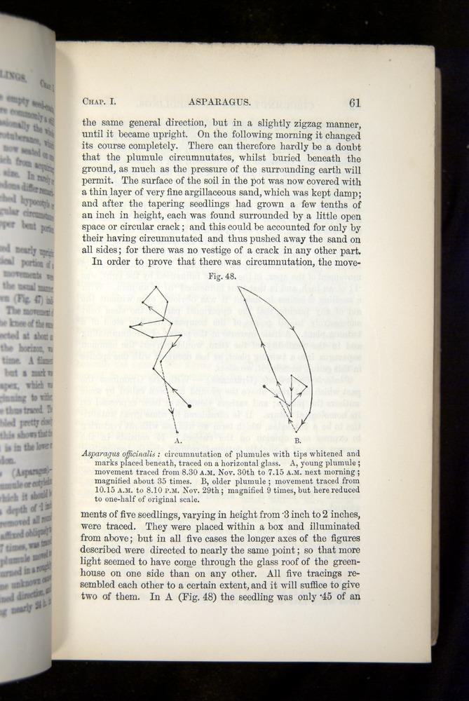 Image of Darwin-F1325-1880-061