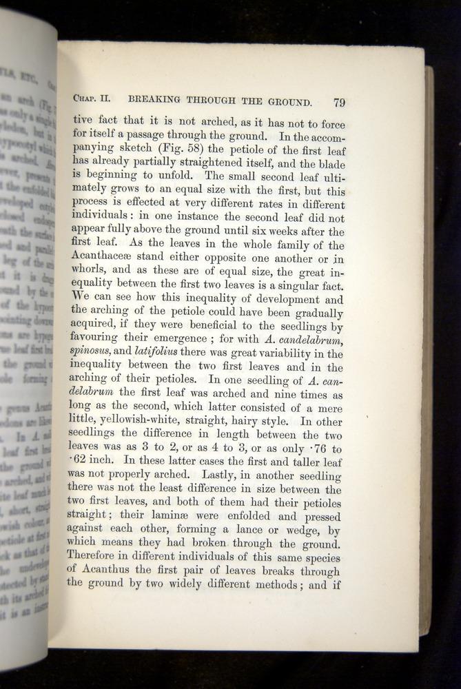 Image of Darwin-F1325-1880-079