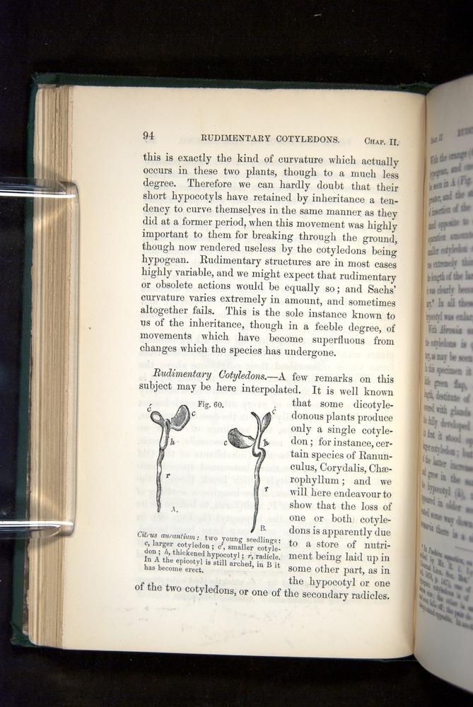 Image of Darwin-F1325-1880-094