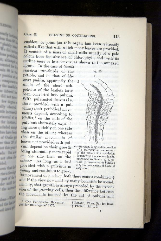 Image of Darwin-F1325-1880-113