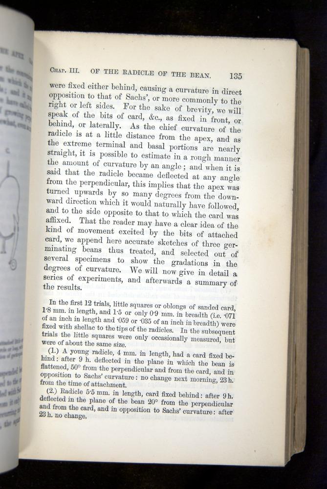 Image of Darwin-F1325-1880-135