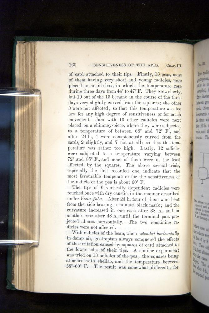 Image of Darwin-F1325-1880-160