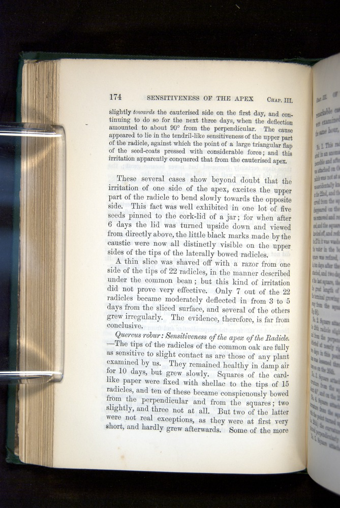 Image of Darwin-F1325-1880-174