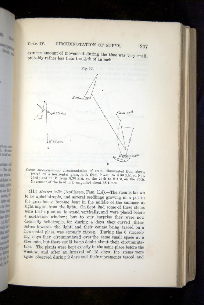 Image of Darwin-F1325-1880-207