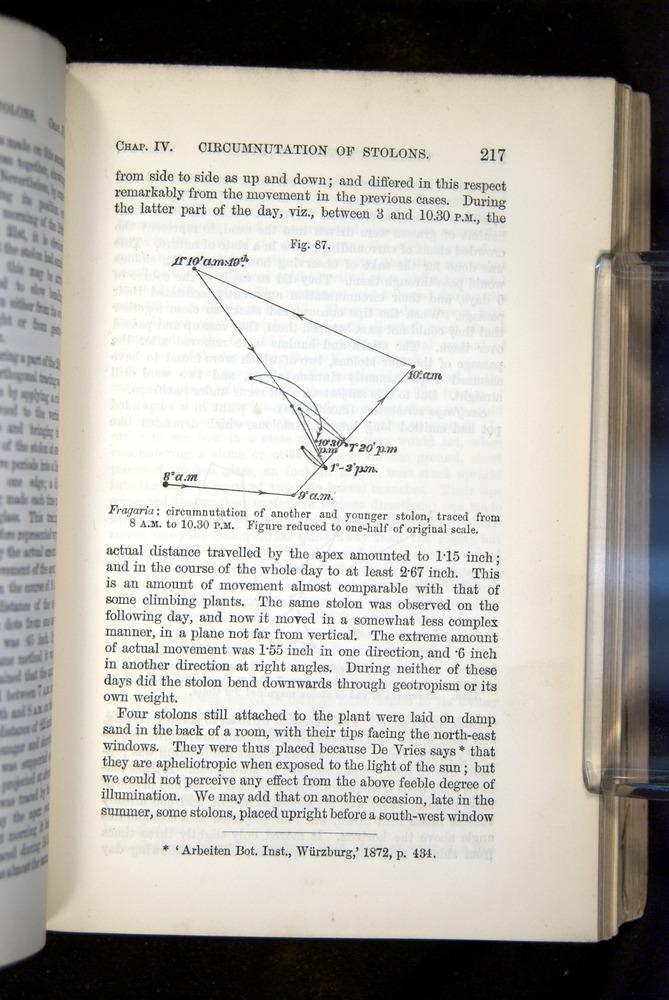 Image of Darwin-F1325-1880-217