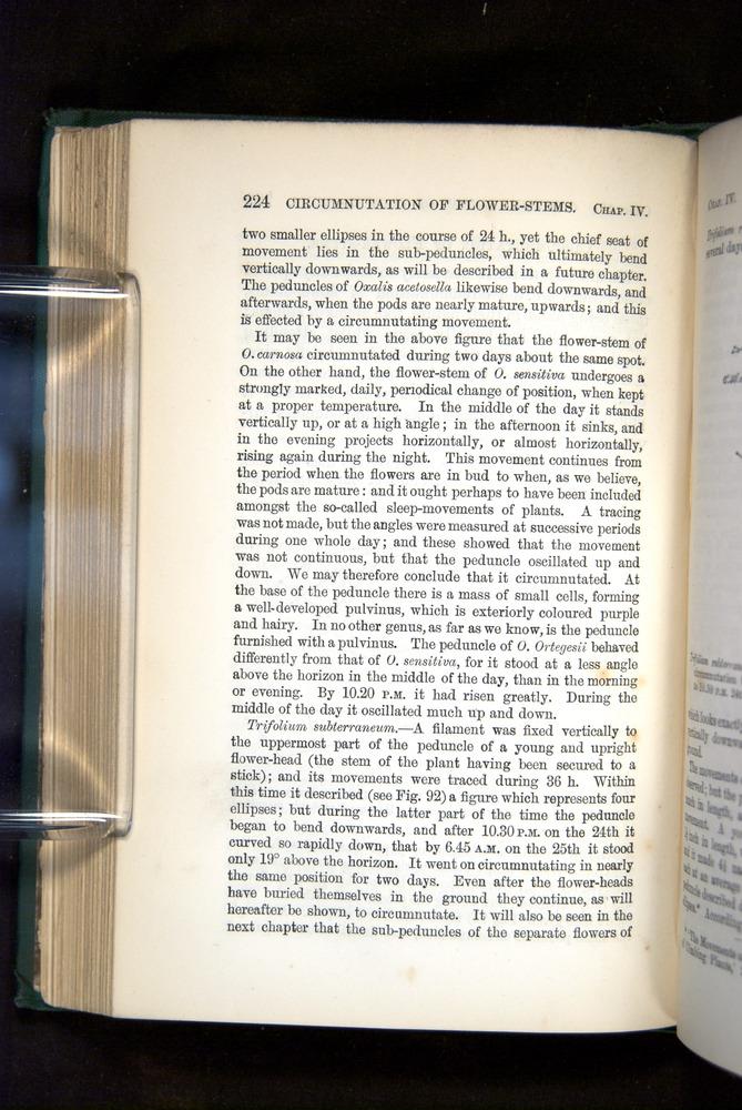 Image of Darwin-F1325-1880-224