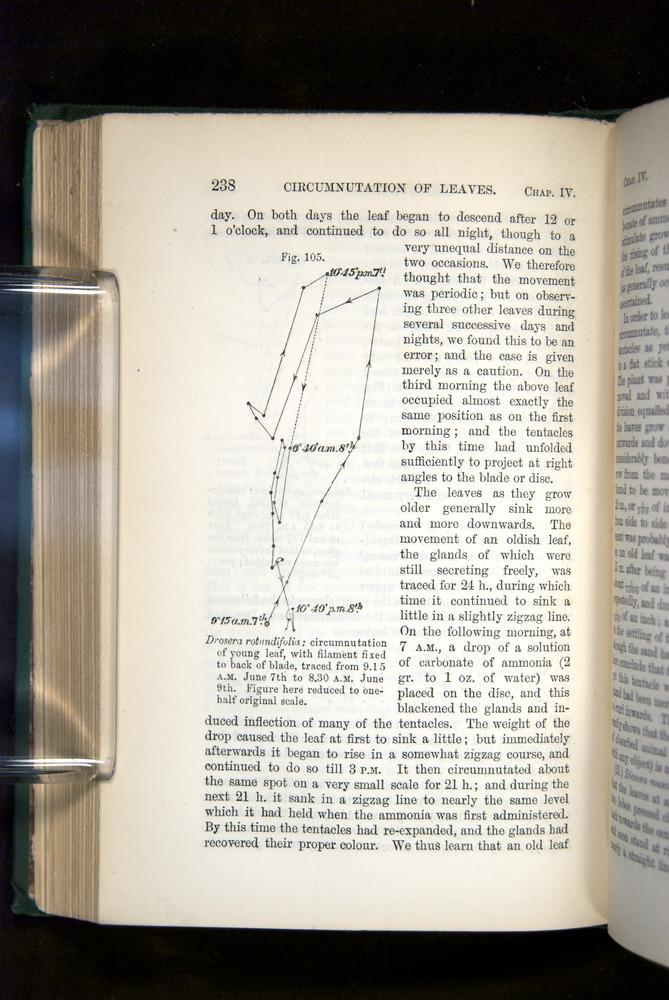 Image of Darwin-F1325-1880-238
