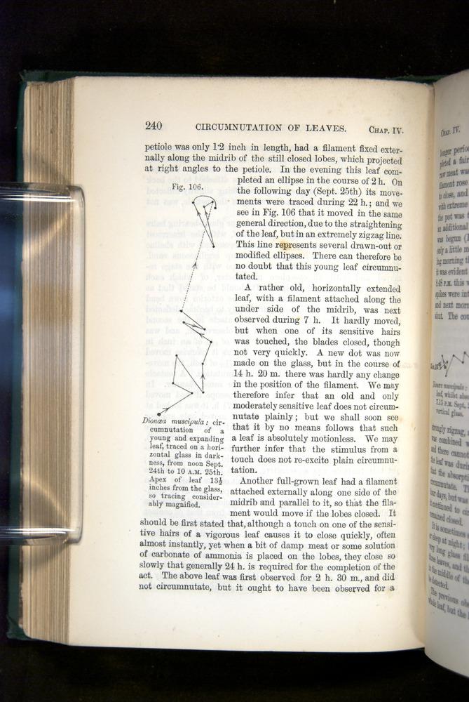 Image of Darwin-F1325-1880-240