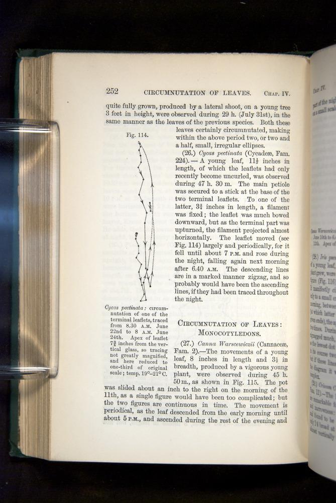 Image of Darwin-F1325-1880-252