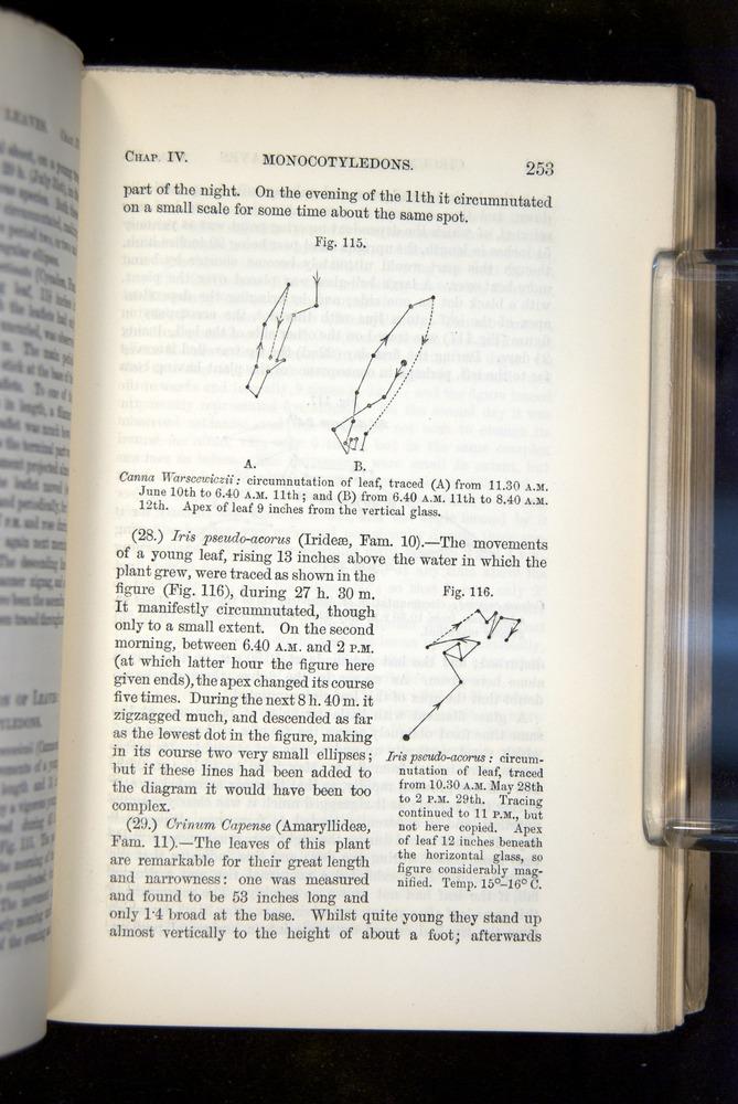 Image of Darwin-F1325-1880-253