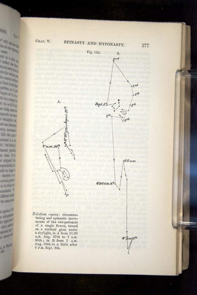Image of Darwin-F1325-1880-277