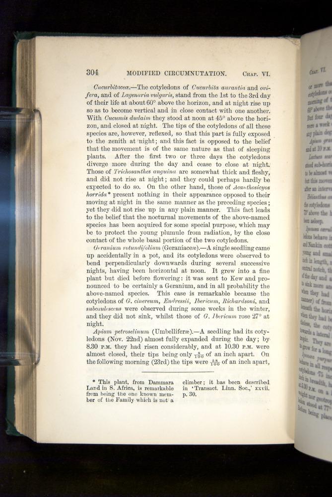 Image of Darwin-F1325-1880-304