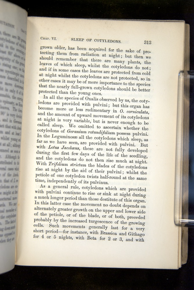 Image of Darwin-F1325-1880-313