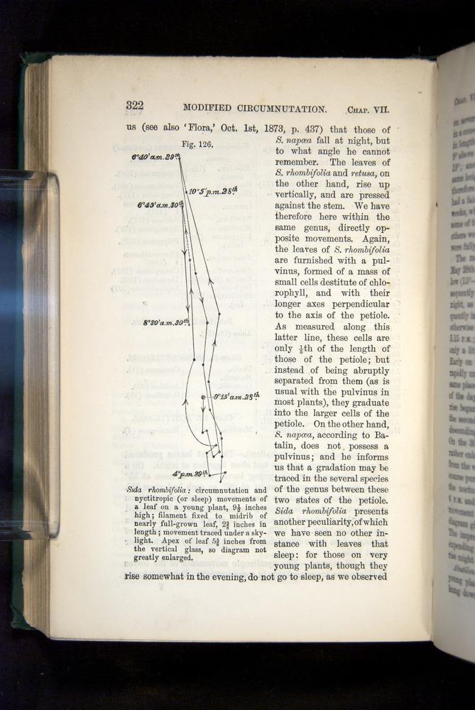 Image of Darwin-F1325-1880-322