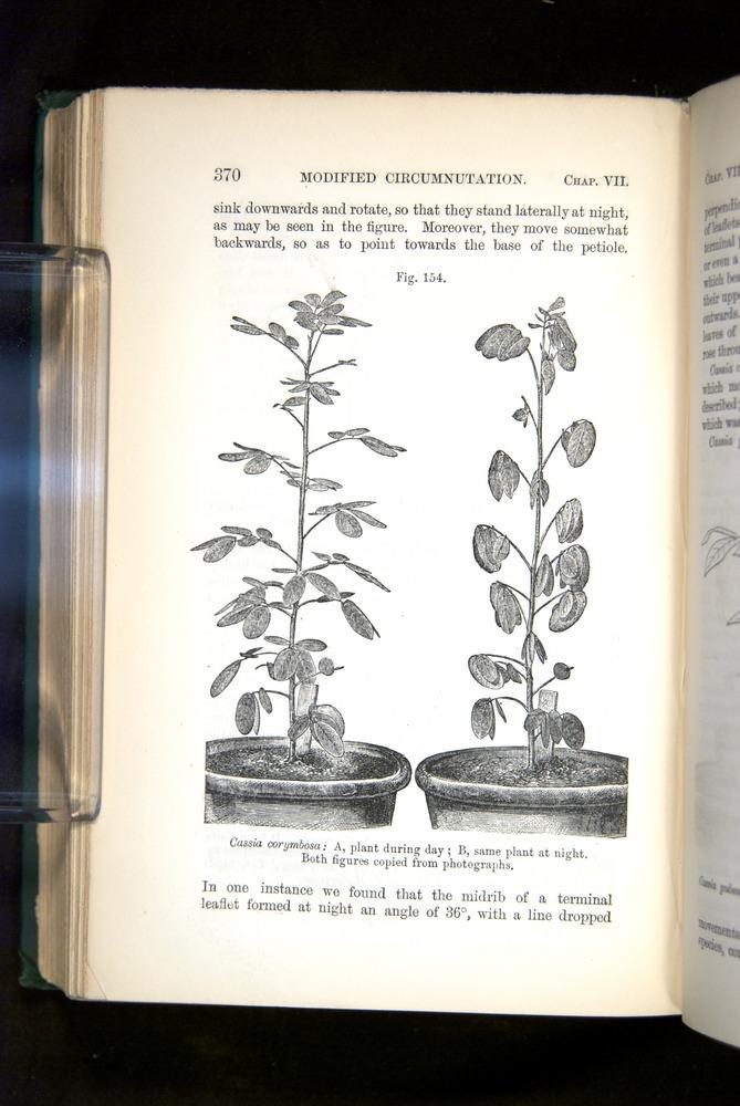 Image of Darwin-F1325-1880-370