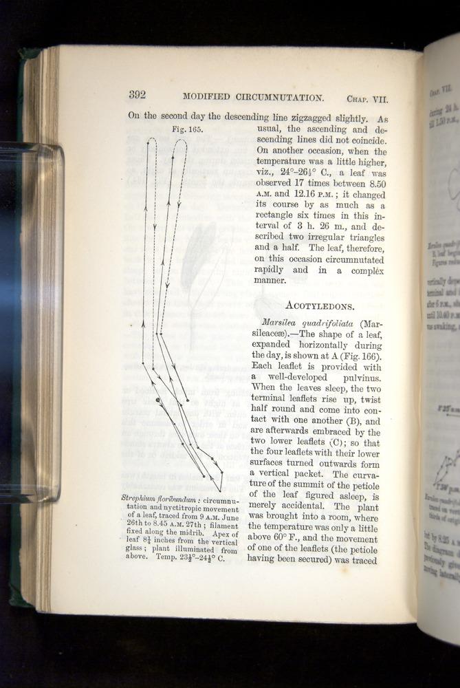 Image of Darwin-F1325-1880-392