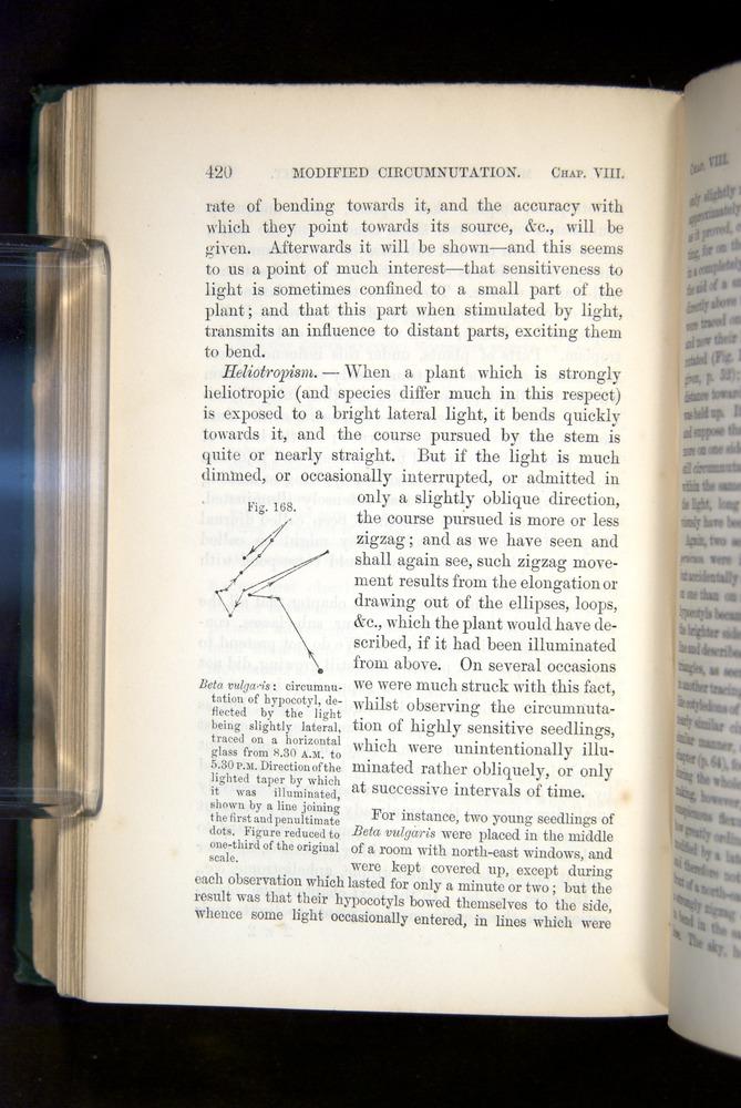 Image of Darwin-F1325-1880-420