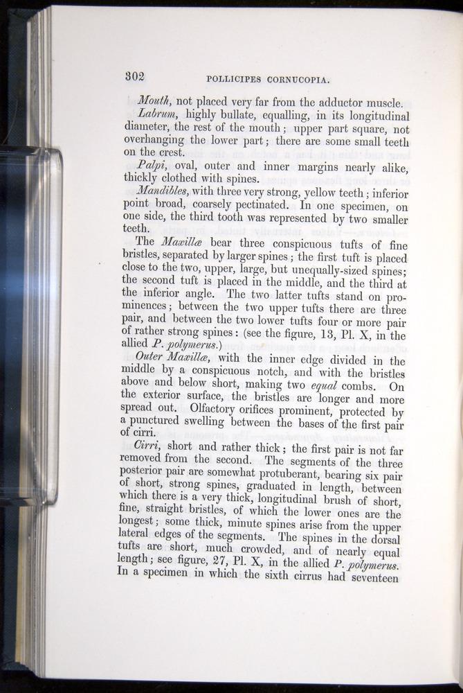 Image of Darwin-F339.1-1851-302