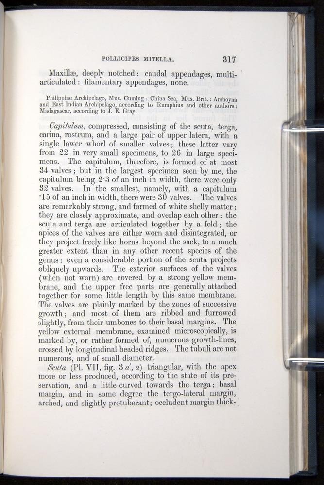 Image of Darwin-F339.1-1851-317