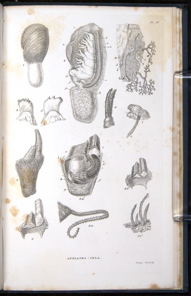 Image of Darwin-F339.1-1851-zzz-f05r