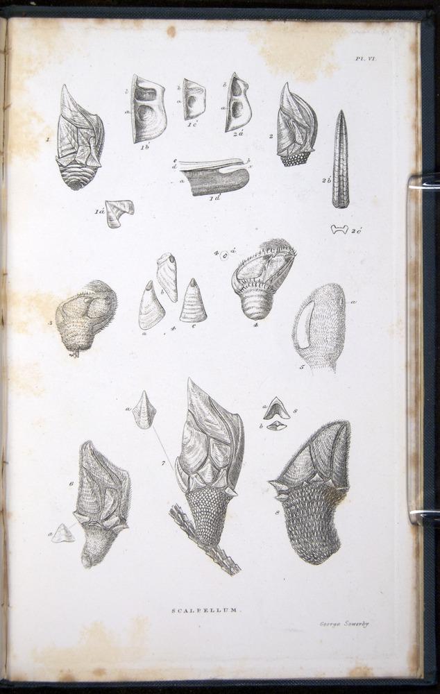Image of Darwin-F339.1-1851-zzz-f07r