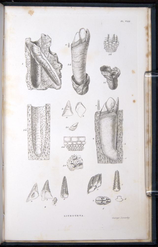 Image of Darwin-F339.1-1851-zzz-f09r