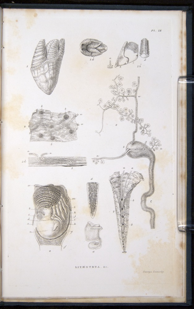 Image of Darwin-F339.1-1851-zzz-f10r