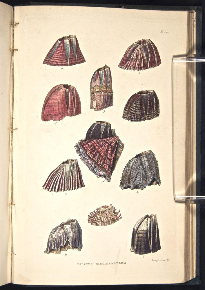 Image of Darwin-F339.2-1854-zzz-f01
