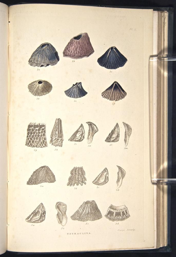 Image of Darwin-F339.2-1854-zzz-f10
