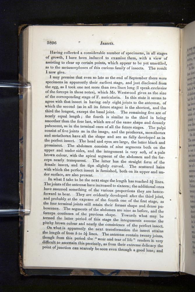 Image of Darwin-F349-1858-Zoologist-v16-05896