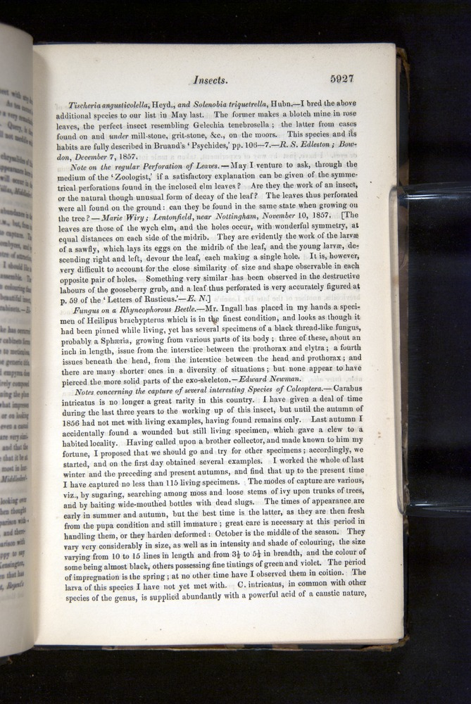 Image of Darwin-F349-1858-Zoologist-v16-05927