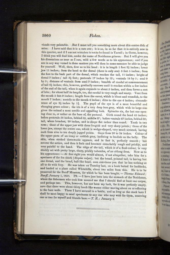 Image of Darwin-F349-1858-Zoologist-v16-05960