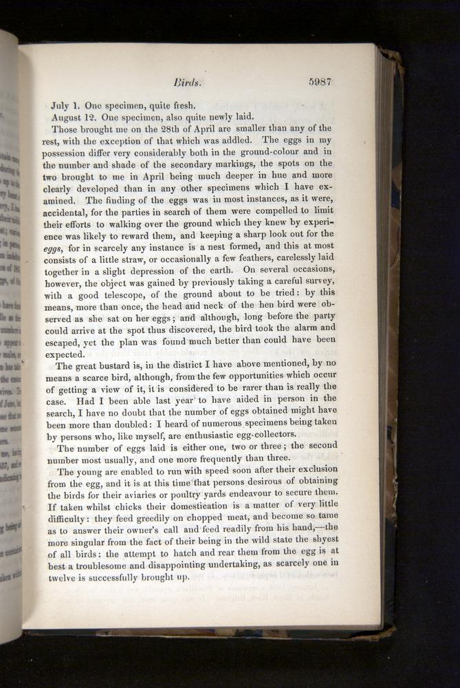 Image of Darwin-F349-1858-Zoologist-v16-05987