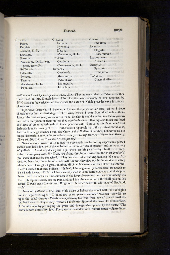 Image of Darwin-F349-1858-Zoologist-v16-06029