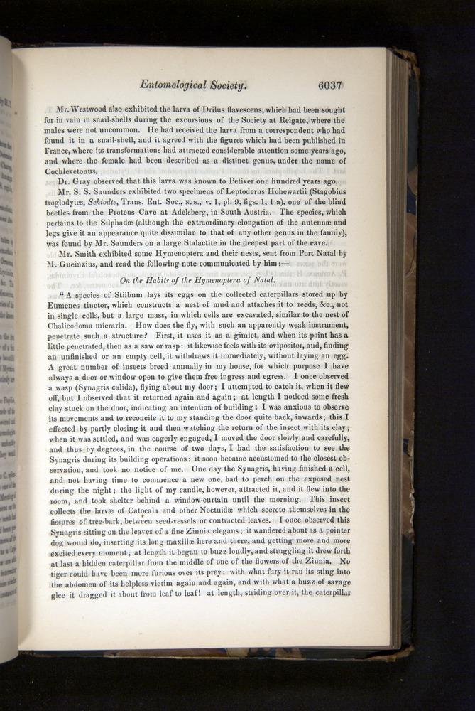 Image of Darwin-F349-1858-Zoologist-v16-06037