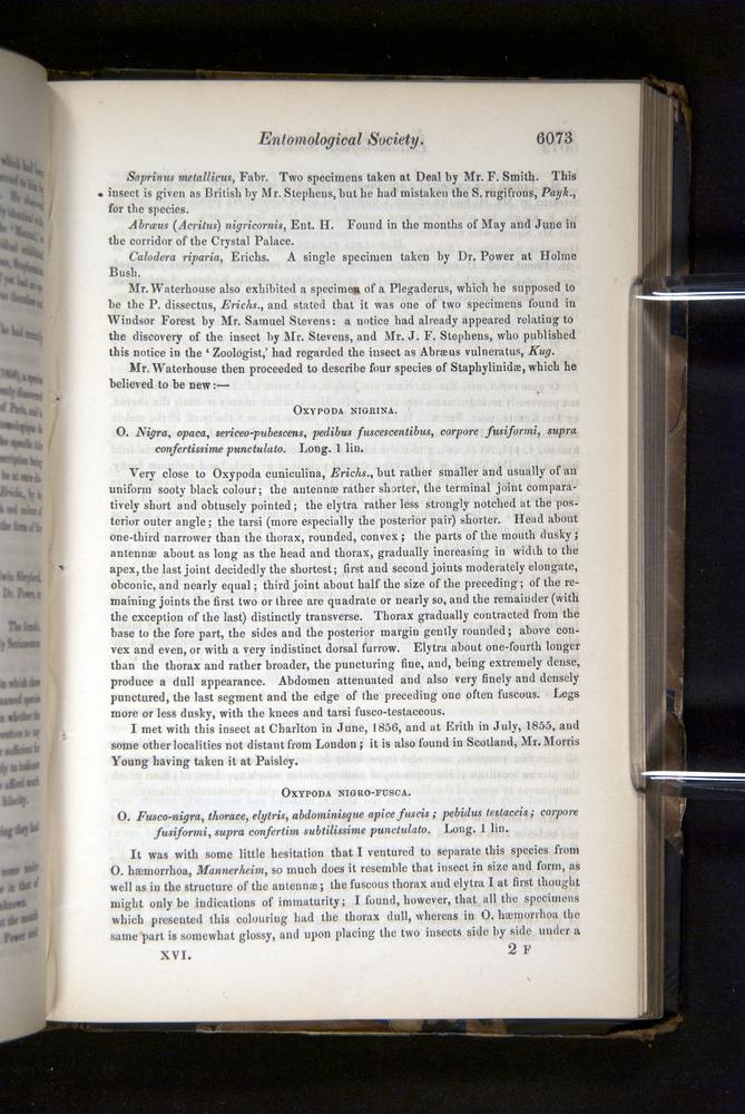 Image of Darwin-F349-1858-Zoologist-v16-06073