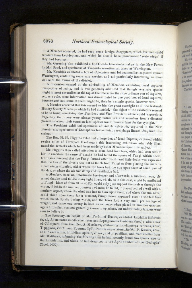 Image of Darwin-F349-1858-Zoologist-v16-06078