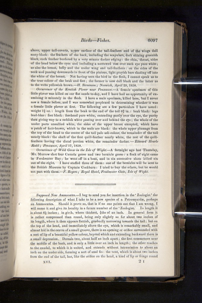 Image of Darwin-F349-1858-Zoologist-v16-06097