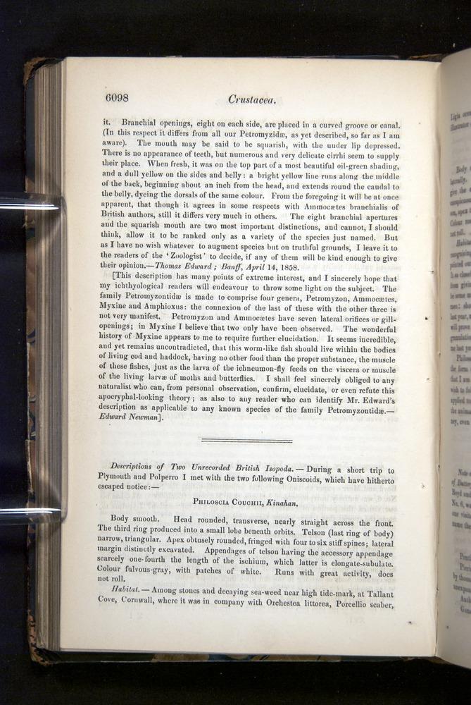 Image of Darwin-F349-1858-Zoologist-v16-06098