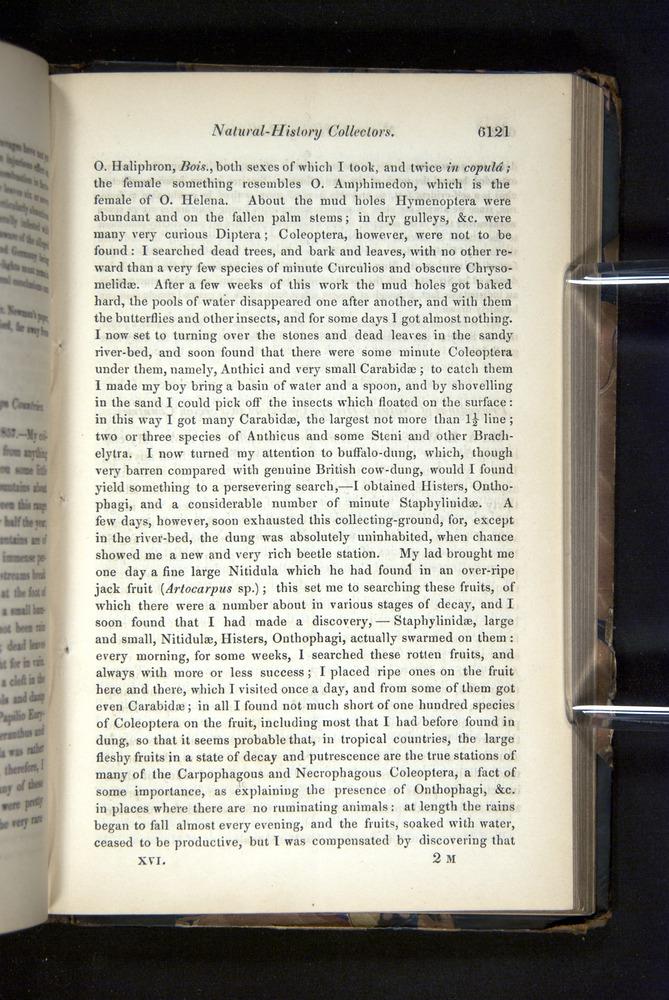 Image of Darwin-F349-1858-Zoologist-v16-06121