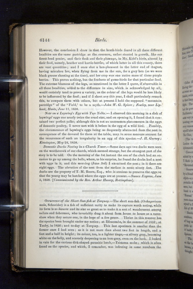 Image of Darwin-F349-1858-Zoologist-v16-06144
