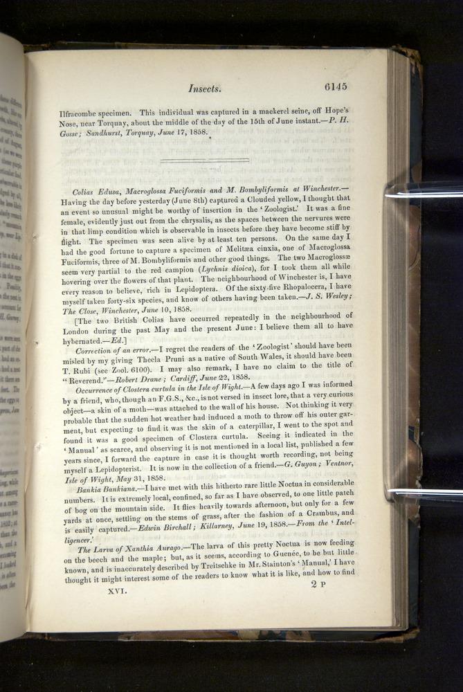 Image of Darwin-F349-1858-Zoologist-v16-06145
